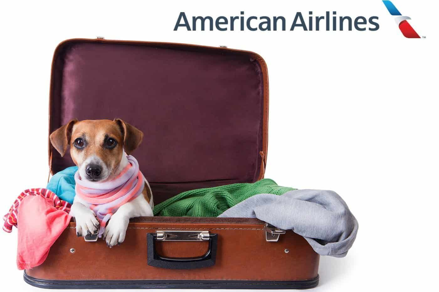 Small dog in a suitcase. American Airlines logo at top of image.